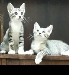 Doação de uma linda gatinha já castrada