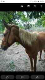 Cavalo de esteira bem quente