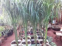 Vendas de mudas e plantas para jardim e chacaras
