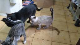 Doa-se gatinhos com +ou - 3 meses.