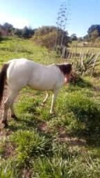 Cavalo disponível para venda mais informação me chama no Whatsapp *