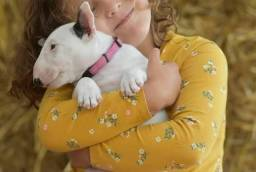 Título do anúncio: Bull Terrier com garantia