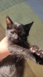 Título do anúncio: doação de gato filhote