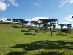 Título do anúncio: Terreno para Investidores em Urupema