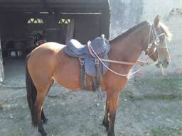 Égua boa nova de picado