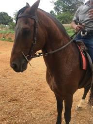 Título do anúncio: Cobertura cavalo garanhao sangue favacho