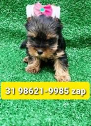 Título do anúncio: Canil Líder Cães Filhotes BH Yorkshire Basset Lhasa Shihtzu Maltês Beagle