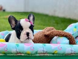 Bulldog Francês Fêmea Mas Novo Amor