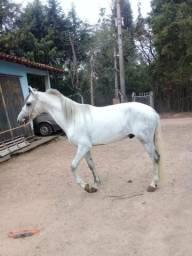 Cavalo extra de marcha picada!!