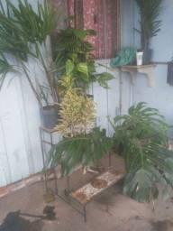 Vendo plantas para dentro de casa