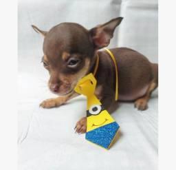 Pinsher macho com auxílio veterinário
