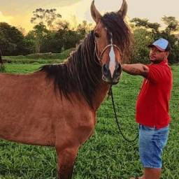 Título do anúncio: Cavalo mangalarga registro no provisório