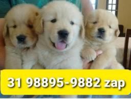 Título do anúncio: Cães Líder Filhotes em BH Golden Dálmata Labrador Rottweiler Pastor Akita