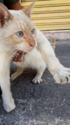 lindo e carinhoso gato branco
