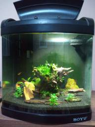 Vendo aquário Boyu MT 408 vidro curvo 32 litros