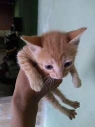 Título do anúncio: Doação de filhotes de gato