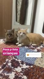 Doa-se duas gatas castradas