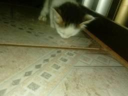 Doa-se um gatinho
