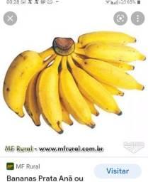 Título do anúncio: Muda de banana prata anã