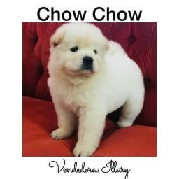Título do anúncio: Chow Chow com pedigree e microchip em até 12x