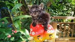 Título do anúncio: Doa-se gata filhote