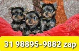 Título do anúncio: Filhotes Cães Líder BH Yorkshire Maltês Lhasa Shihtzu Poodle Beagle