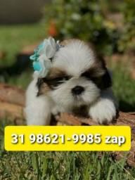 Título do anúncio: Filhotes Cães Premium em BH Shihtzu Yorkshire Beagle Basset Lhasa Maltês