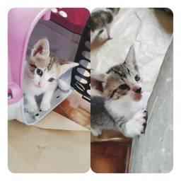 Gatinhos com 2 meses pra adoção