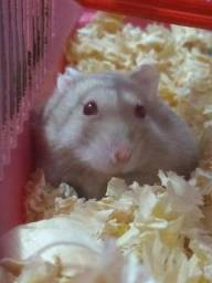Alguém doando hamsters?