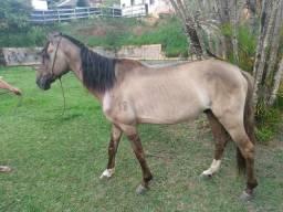 Vende-se cavalo castrado de macha batida ou troco em égua telefone *