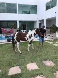 Vendo portas e potros quarto de milha e paint Horse
