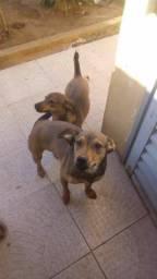 Doa-se duas cadelas - urgente