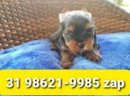 Título do anúncio: Filhotes Cães Alto Padrão em BH Yorkshire Shihtzu Maltês Lhasa Beagle Basset