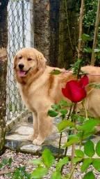 cães hospedagem