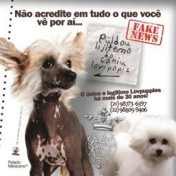 O ÚNICO e LEGÍTIMO há mais de 30 anos - LovpuppiesKennel Brazil.