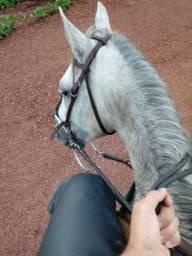 Cavalo à venda(valor negociável)