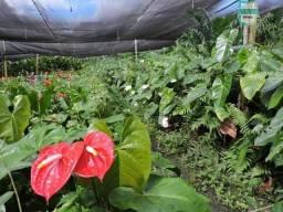 Sítio tipo fazenda em Catu na região de Sítio Novo