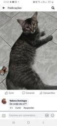 Doação de gato fêmea 1 ano
