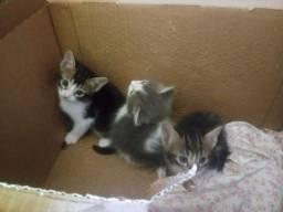 Título do anúncio: Filhotes de gato