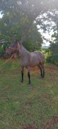 Égua Crioula Rosilha