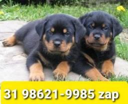 Título do anúncio: Canil Filhotes Maravilhosos Cães BH Rottweiler Akita Boxer Pastor Labrador Golden