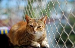 Título do anúncio: Proteja seu gato com as Redes de Proteção!