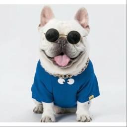 Título do anúncio: Óculos para cachorros