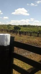 Fazenda Bela vista Paragominas