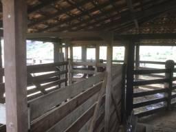 Fazenda 246,9 alqueires - Carlos Chagas/MG