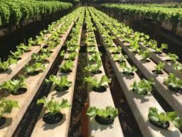 Mudas de verduras hidroponia e terra