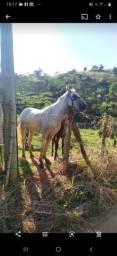 Título do anúncio: Cavalo e potro