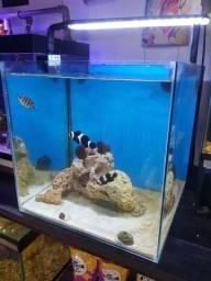 Título do anúncio: Aquario Marinho 50Litros