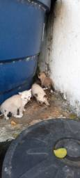 Título do anúncio: Adoção Urgente - 3 gatinhos