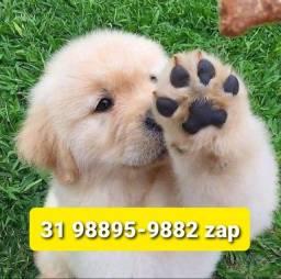 Título do anúncio: Canil Filhotes Diferenciados Cães BH Golden Labrador Dálmata Pastor Rottweiler Akita